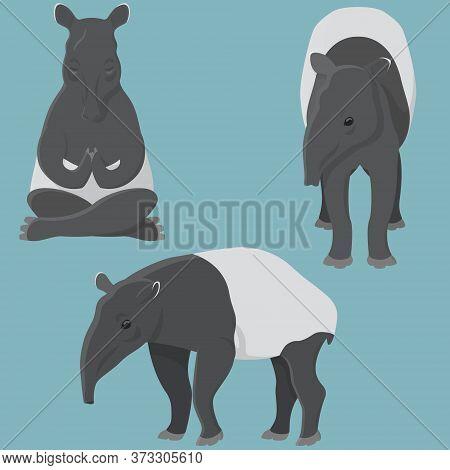 Tapir In Various Poses. Unusual Animal In Cartoon Style.