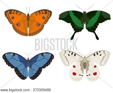 Butterflies Of Different Species. Set Of Beautiful Insects.
