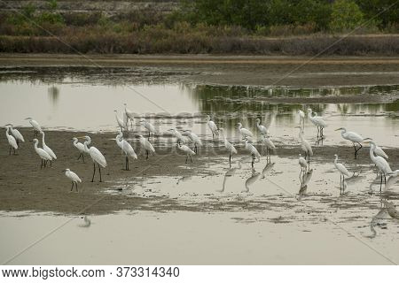 Wild Birds In The Ban Laem District Near The City Of Phetchaburi Or Phetburi In The Province Of Phet
