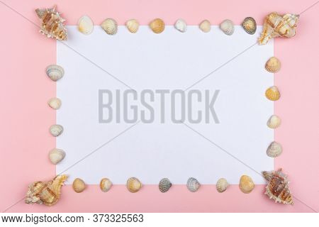 Seashells On The Perimeter Press A White Sheet On A Pink Background