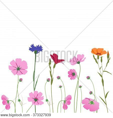Summer Meadow Plants, Bouquet Of Cornflower, Kosmeya, Buttercup. Seamless Line Horizontal Border. Cu
