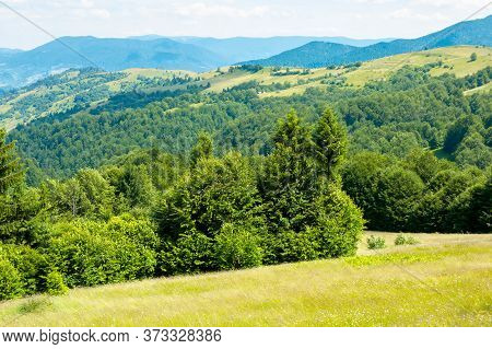 Trees On The Grassy Hill. Summer Mountain Landscape. Wonderful Weather On A Sunny Day. Bright Sky At