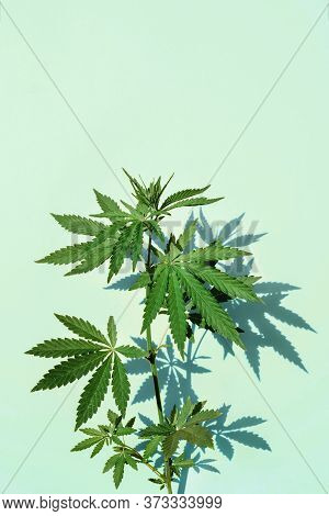 Beautiful Green Marijuana Plant, Hemp Leaves On A Blue Background. Cannabis Background Front View, C