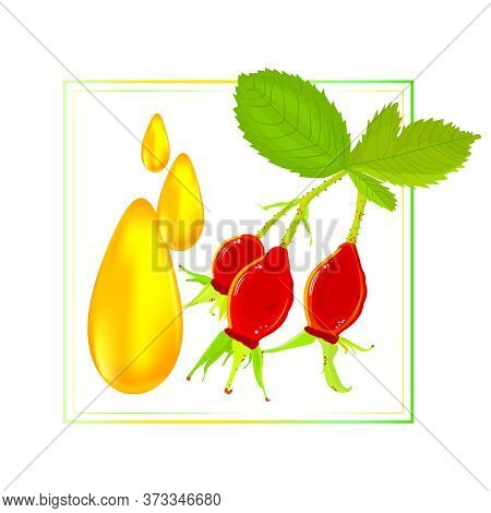 Frame With Rosehip Berries And Dog Rose Oil Drops Isolated On White Background. Oil Rose Hips. For C