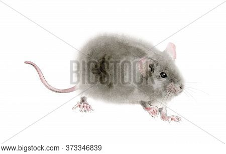 Watercolor Mouse (rat) Illustration. Hand Drawn Illustration Of A Cute Fluffy Gray Rat With Pink Ear