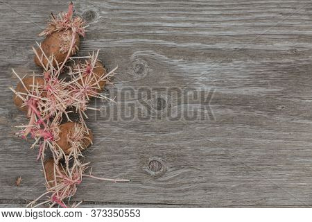 Sprouted Weird Organic Potatoes On Rustic Wooden Background Mock Up. Top View Of Flabby, Wrinkled, U