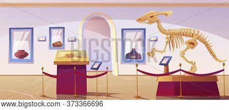 Historical Museum Interior With Dinosaur Skeleton And Archeological Exhibits. Vector Cartoon Illustr