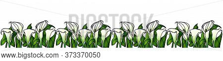 Devider - Calla Lilies With Large Green Leaves - Vector Full Color Picture. Garden Flowers - White C