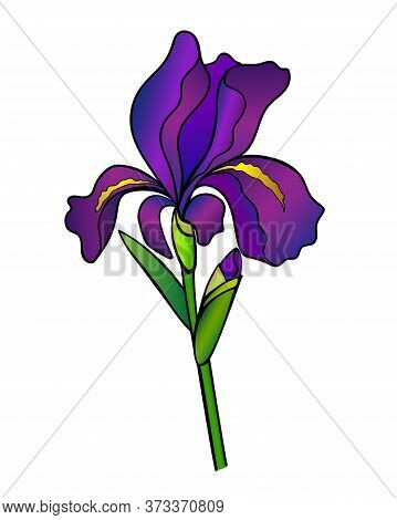 Iris Flower With A Bud, Stem And Leaf - Full Color Vector Illustration. Purple Iris Is A Garden Plan