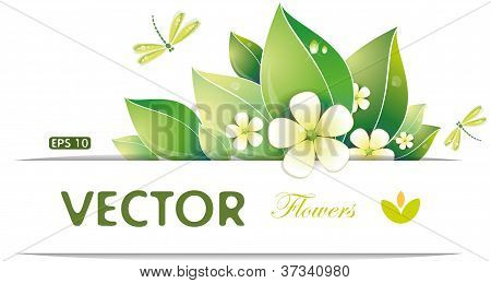 Green Leaves And Jasmin Flowers