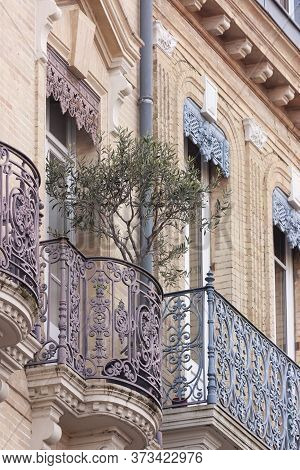 An Olive Tree On The Openwork Balcony
