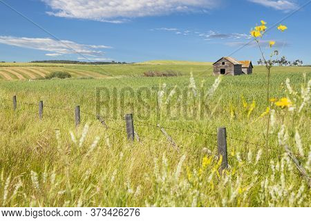 A Landscape Picture With An Old Grain Silo In A Wheat Field On The Canadian Prairies As Farmers Seed