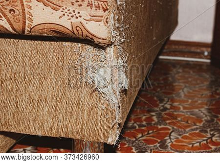 A Ragged Corner Of The Sofa That Had Been Ruined By Pets ' Claws. Close Up.