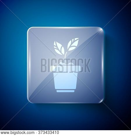 White Plant In Pot Icon Isolated On Blue Background. Plant Growing In A Pot. Potted Plant Sign. Squa