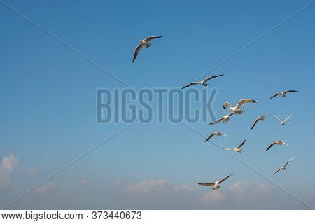 Seagull Flying In Sky. Seagull Flying Sky As Freedom Concept