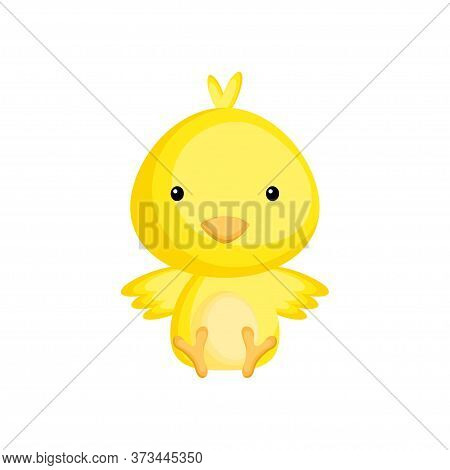 Cute Baby Chicken Sitting Isolated On White Background. Adorable Animal Character For Design Of Albu
