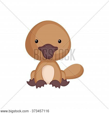 Cute Baby Platypus Sitting Isolated On White Background. Adorable Animal Character For Design Of Alb