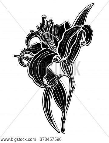 Lily. Black Silhouette Of A Large Lily Flower With Leaves And Stalk - Vector Illustration. Lily - In
