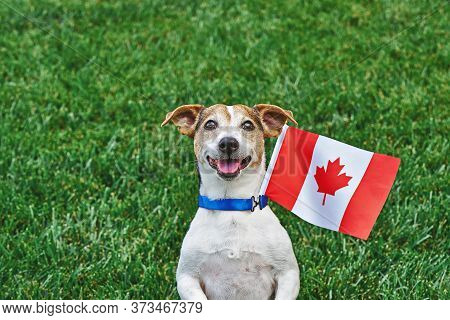 Dog Sitting On Grass With Canadian Flag On Green Grass. Celebration Of Canada Day.happy Canada Day.