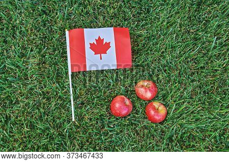 Canadian Flag On Green Grass Background With Red Apples. Happy Canada Day. 1st July Celebrate Nation