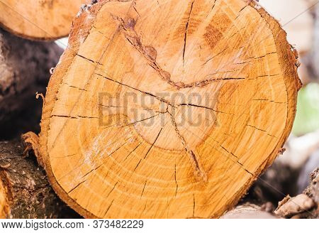 A Section Of A Tree. Wood Texture. Rings On The Tree Trunk.wood Background.