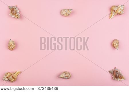 Eight Shells On A Pink Background Around The Perimeter