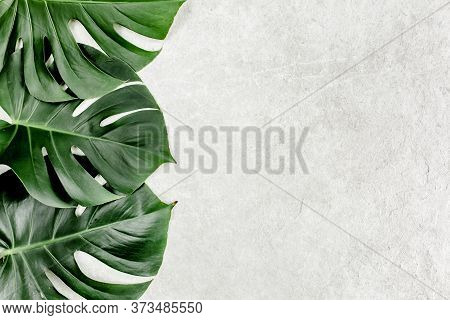 Close-up Of The Monstera Leaf. Tropical Palm Leaves Monstera Isolated On Gray Marble Background. Tro