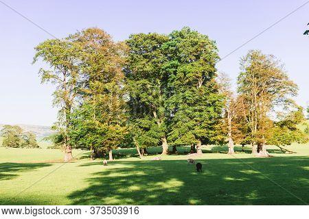 The Open Parkland Of Dallam Park On A Sunny Evening Milnthorpe, Cumbria, England