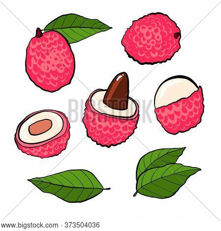 Lychees Hand Drawn Set Isolated On White Background. Lychee Fresh Fruits On The Branch, Half And Pie