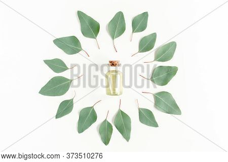 Eucalyptus Essential Oil, Round Frame Made Green Leaves Eucalyptus Populus Isolated On White Backgro