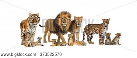 Large group of many wild cats, cub and adult together in a row