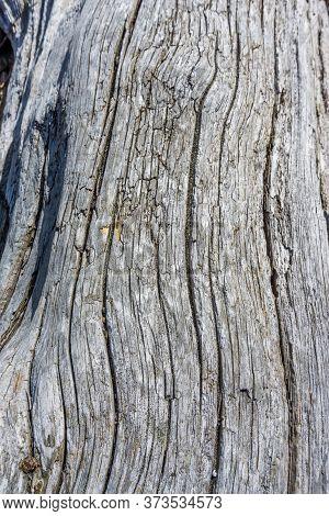 A Background Shot Of A Driftwood Long On The Shoreline Of Vashon Island.