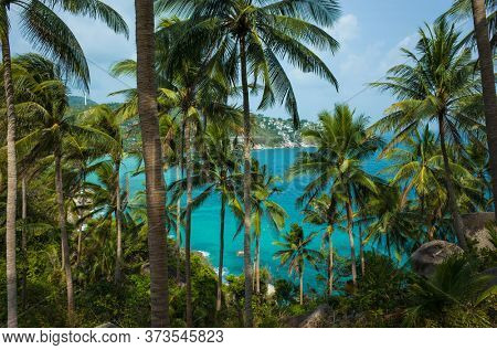 Coconut palm tree plantation on tropical paradise island Koh Tao in Thailand. Turquoise blue water visible between trunks of palm trees