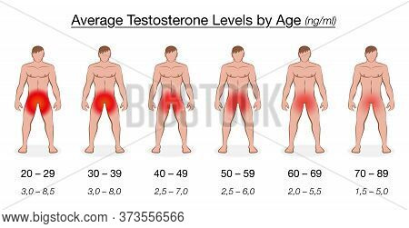 Testosterone Level Chart With Age And Decreasing Average Values In Ng/ml, Nanogram Per Milliliter. N