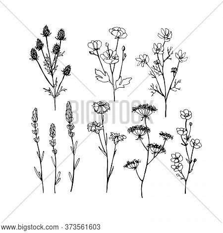 Abstract Wildflowers. Collection Of High Quality Hand-drawn Line Art Illustrations Of Wildflowers