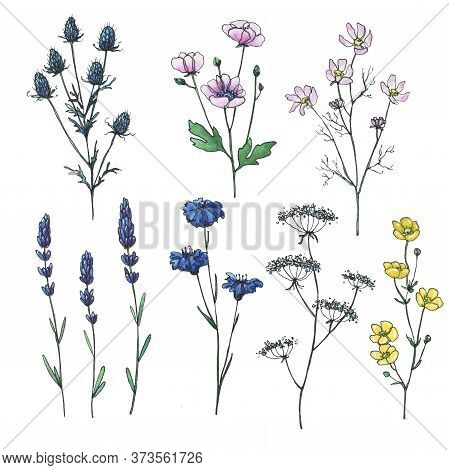 Abstract Wildflowers. Collection Of High Quality Hand-drawn Watercolor And Line Art Illustrations Of
