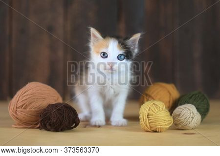 Standing Calico Kitten With Yarn on a Wooden Background