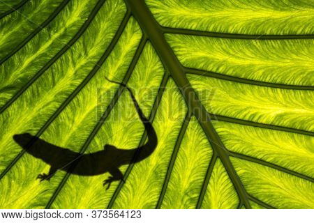 Shadow Of A Lizard On Exotic Leaf In Detail