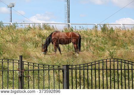 Red Horse With Long Mane In Flower Field Against Sky.