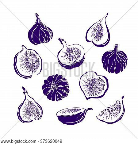 Figs Fruit Set. Vector Monochrome Shape. Fresh Food, Juicy Pulp. Collection Isolated On White Backgr