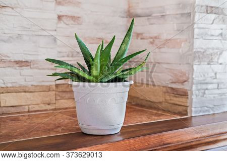 Aloe Plant In White Pot. Minimal Style Home Decor. Close Up View. Hipster Interior. Aloe Vera Flower