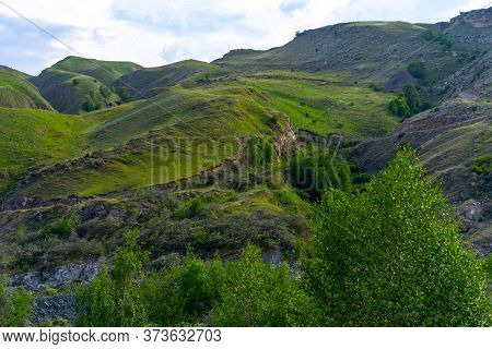 Trees And Vegetation In The Mountains.trees And Vegetation In The Mountains