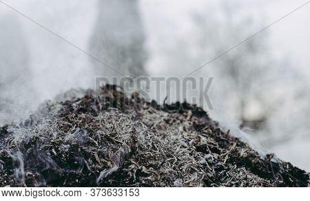 Burning Bonfire From Tree Branches.burning Bonfire From Tree Branches