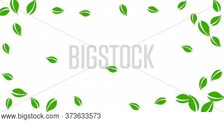 Falling Green Leaves. Fresh Tea Neat Leaves Flying. Spring Foliage Dancing On White Background. Appe
