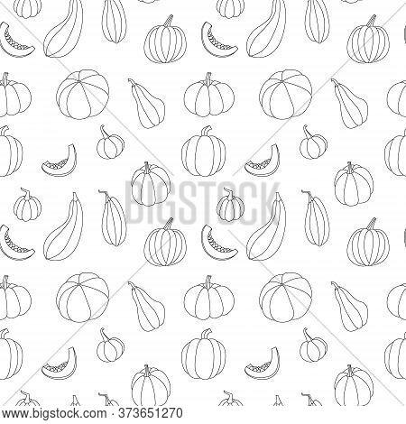 Pumpkin, Squash, Zucchini, Marrow. Various Shapes And Colors. Perfect For Autumn Decorative Design,