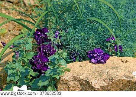 An Incredible Landscape Of Some Purple Flowers With A Big Brown Stone.