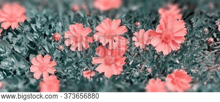 Red Flower. Flower In Garden At Sunny Summer Or Spring Day. Flower For Postcard Beauty Decoration An