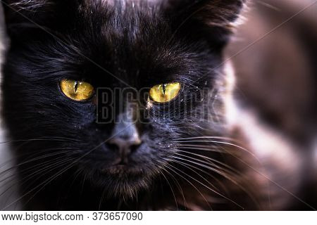 Extreme Close Up Of A Cat Eye, This Is A Macro Shot  We Can See The Texture Textured Of His  Face,