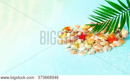 Seashells And Palm Leaf On Blue Background. Summer Time Or Hello Summer. Creative Copy Space