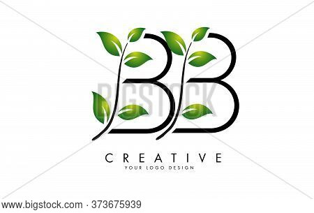 Leaf Letters Bb B Logo Design With Green Leaves On A Branch. Letters Bb With Nature Concept. Eco And